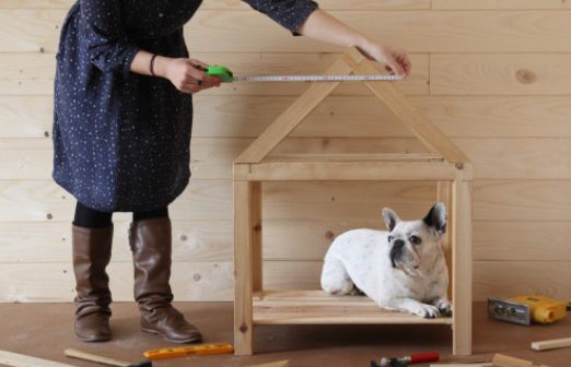 construction-niche-chien