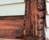 Comment se débarrasser des termites ?