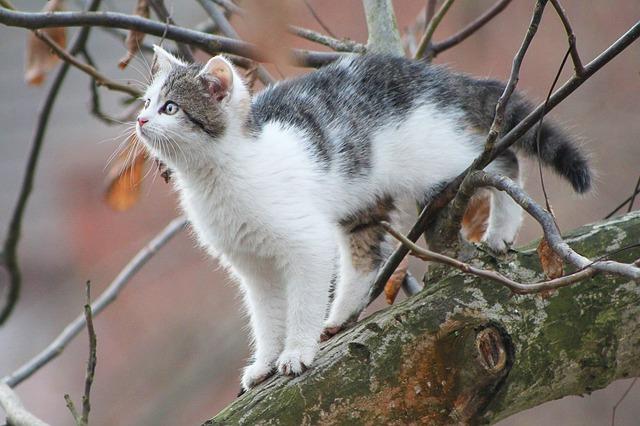 arbre-a-chat